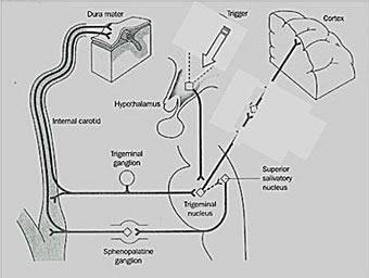 Sistema Trigêmino-Vascular
